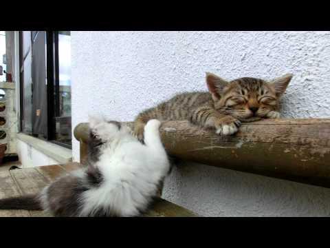 Спящие котята