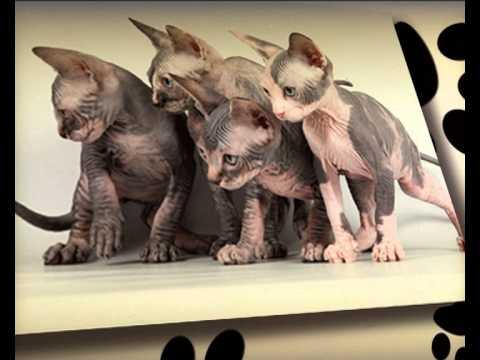Диетология кошек с Ярославом Рюминым 2 / Cat food & Pet Nutrition 2