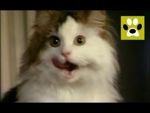 Кошка ходит в туалет мимо лотка. Как с этим бороться?