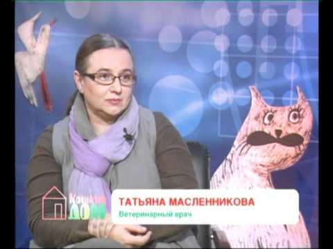 КОШКИН ДОМ выпуск №34