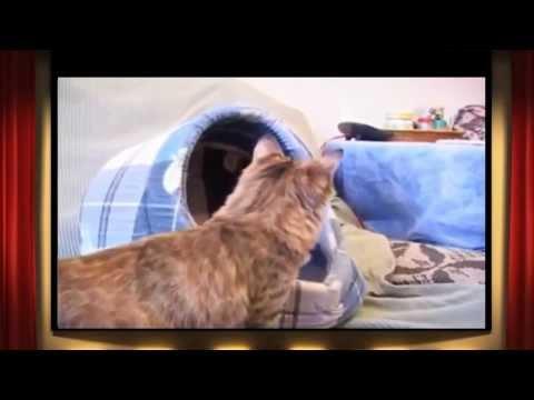 Советы заводчика. Котенок в доме.