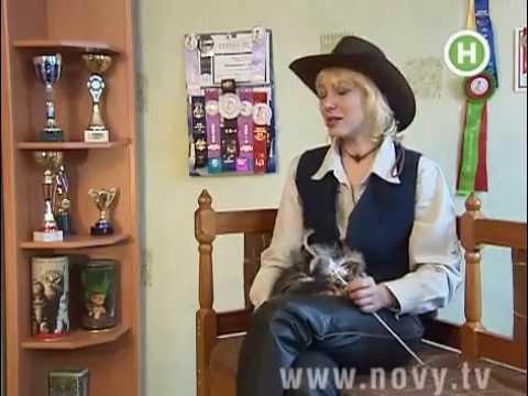 телеканал Новий в питомнике кошек Bartalameo*UA, порода Мейн Кун