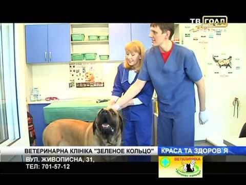 """Ветеринарная клиника Запорожья """"Зеленое кольцо"""""""
