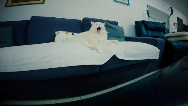 Тяжелый день кота снятый на GoPro Black