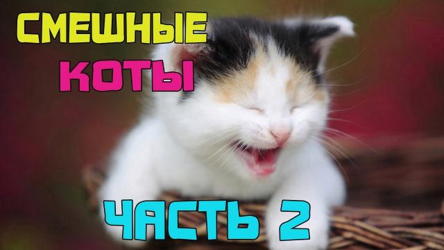Подборка смешных котов 2 ツ