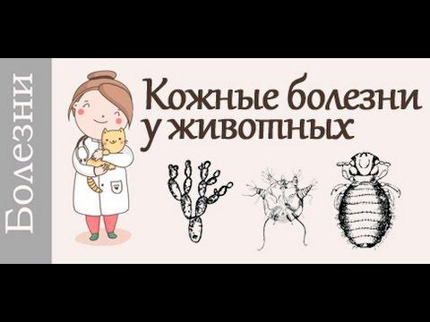 Кожные заболевания у собак и кошек. Советует #ветеринар