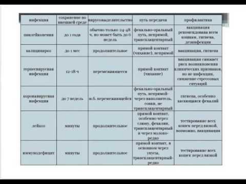 """Вебинар. Инфекционные болезни кошек, Часть 2. Сеть ветклиник """"Котонай""""."""