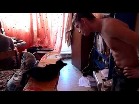 Прикол с кошкой (диалог)