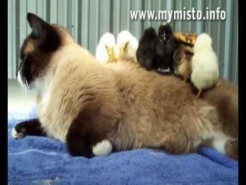 Funny Cats. Приколы с котами - Мегаподборка