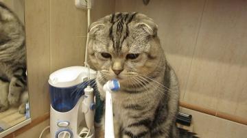 Кот чистит зубы самостоятельно