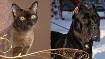 Cats&DogsTV - УДИВИТЕЛЬНЫЙ МИР КОШЕК / УДИВИТЕЛЬНЫЙ МИР СОБАК / ЗДОРОВЬЕ В ЦЕНТРЕ ВНИМАНИЯ