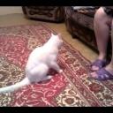 Злой белый кот