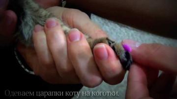 Антицарапки для кошек. Мягкие коготки. Силиконовые колпачки на когти