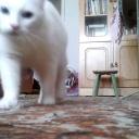 Funny white cats \ Забавные белые коты